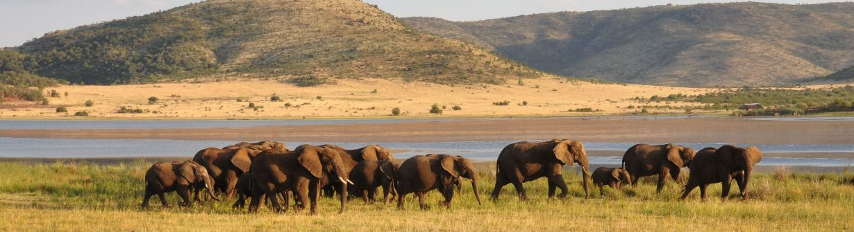 parc kruger - voyage afrique du sud