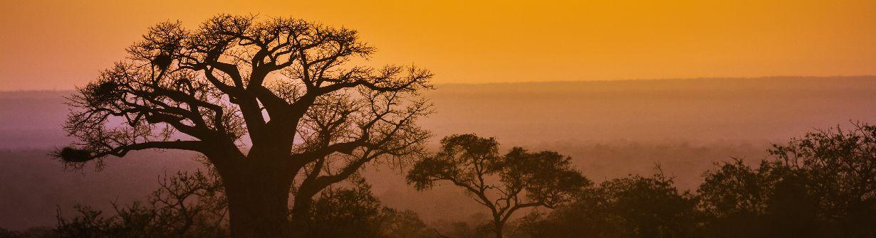 limpopo - voyages en afrique du sud