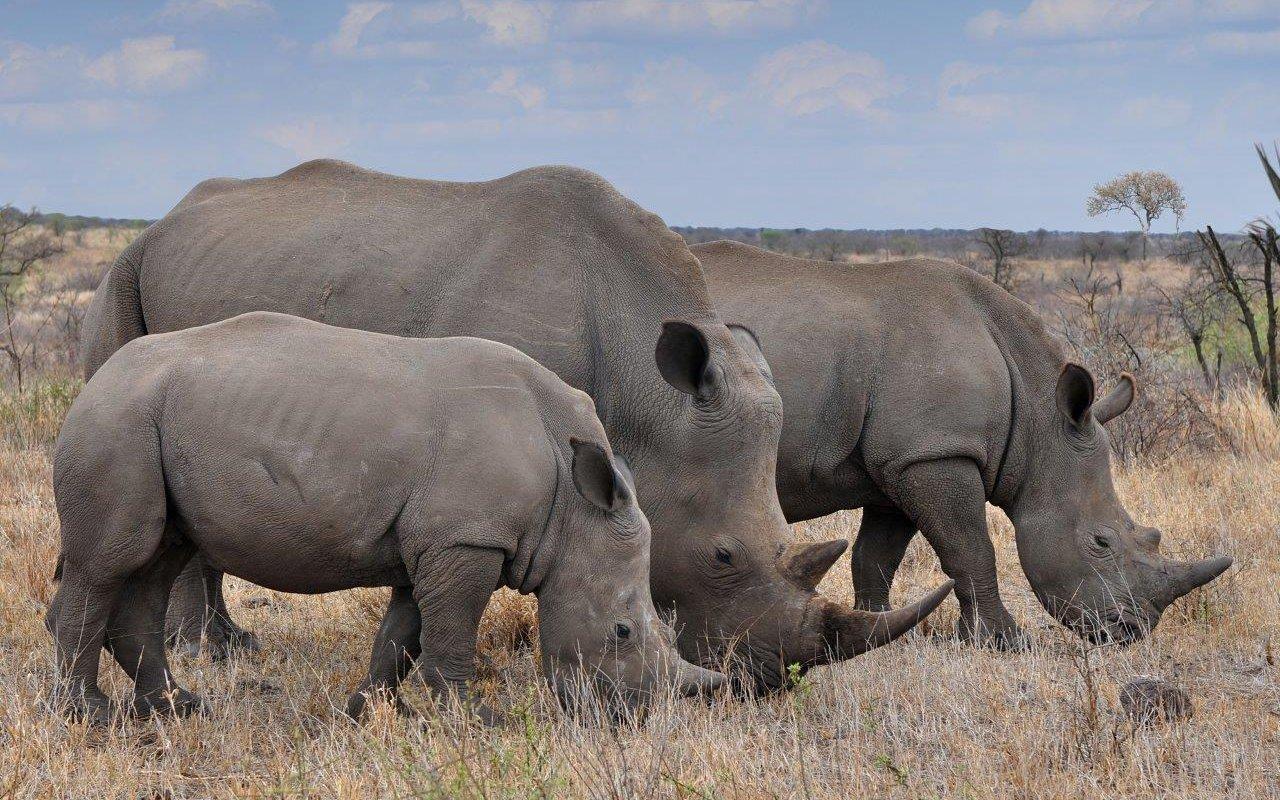 safari pilanesberg madikwe