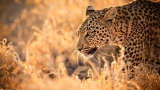 Big 5 et Big Bleu : Afrique du Sud et Mozambique