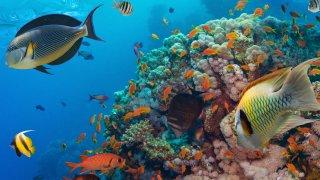 plongée en afrique du sud - voyage terra south africa