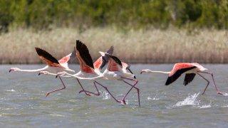 Echappée romantique en Afrique du Sud : savane et plage de sable blanc