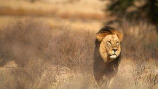 Objectif Kgalagadi – Voyage Afrique du Sud et Botswana