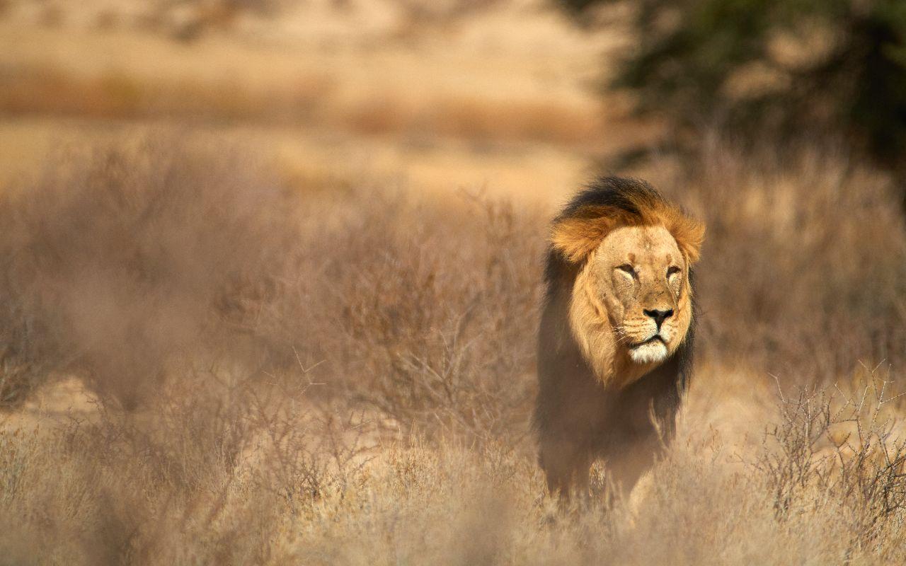 Kgalagadi - voyage afrique du sud - terra south africa