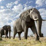 Eléphants - afrique du sud - terra south africa
