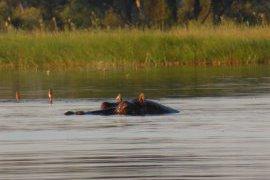 delta okavango - voyage botswana - terra south africa