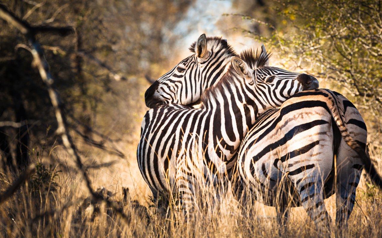 circuit famille pays zoulou - pays zoulou - voyage afrique du sud