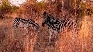 Voyage au Limpopo et Botswana