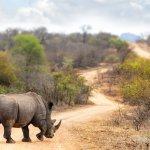 Rhinocéros - afrique du sud - terra south africa