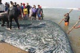 sardine run afrique du sud - voyage terra south africa