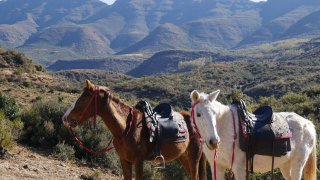 cheval au lesotho - voyage terra south africa