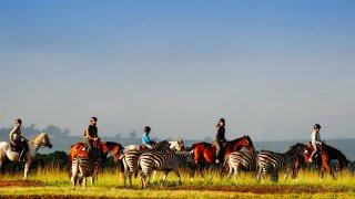 préparer votre voyage en afrique du sud - essentiel Afrique du Sud - circuit incontournable en afrique du sud