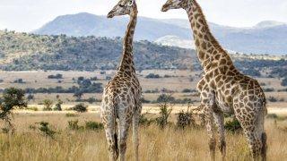 savane africaine - voyage afrique du sud