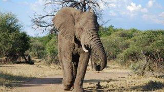 safari pilanesberg et madikwe - safari en afrique du sud