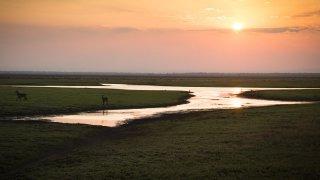 Parc National Gorongosa - voyage mozambique - terra south africa