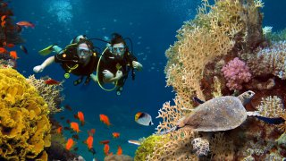 plongée à vilanculos - voyage mozambique