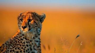 Parc Transfrontalier du Kgalagadi - circuit afrique du sud et botswana - terra south africa