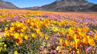 Parc National Namaqua - Terra South Africa