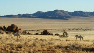 Chevaux sauvages du Namib - Terra South Africa