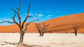 Dead Vlei - afrique du sud - terra south africa
