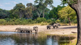 éléphants - afrique du sud - terra south africa