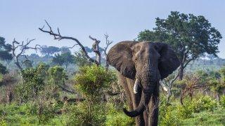 éléphant - circuit afrique du sud - terra south africa