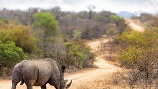 rhinoceros - voyage afrique du sud - terra south africa