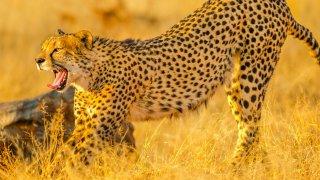 leopard - voyage afrique du sud - terra south africa