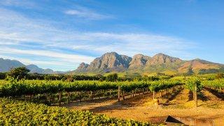 vignes afrique du sud - voyage terra south africa