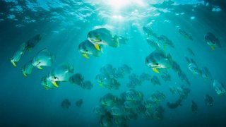 plongée au récif d'Aliwal Shoal au sud de Durban - voyage terra south africa