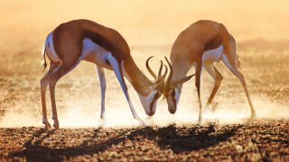 Onyx - voyage afrique du sud - terra south africa