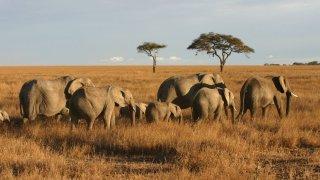 éléphants - voyage afrique du sud - terra south africa