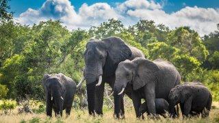 Eléphants - voyage famille afrique du sud