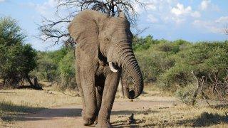 Eléphant - voyage afrique du sud