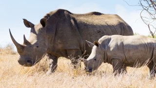 Parc Nationarhinoceros - voyage afrique du sud - terra south africa