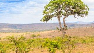 Parc National Hluhluwe-iMfolozi - voyage afrique du sud - terra south africa