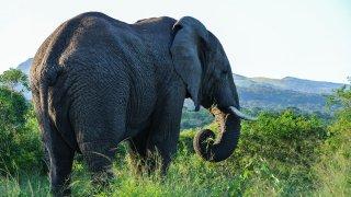 éléphant - voyage afrique du sud - terra south africa