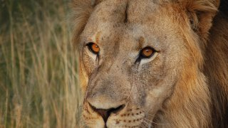 séjour en afrique du sud - sun city - terra south africa
