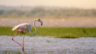 contact terra south africa - flamant rose - lune de miel en afrique du sud