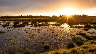 Forêt côtière du Maputaland - lune de miel en afrique du sud - terra south africa