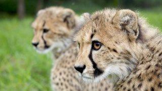 Safari en famille au Kruger et au Swaziland - voyage famille afrique du sud