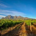 Stellenbosch vignes afrique du sud - terra south africa