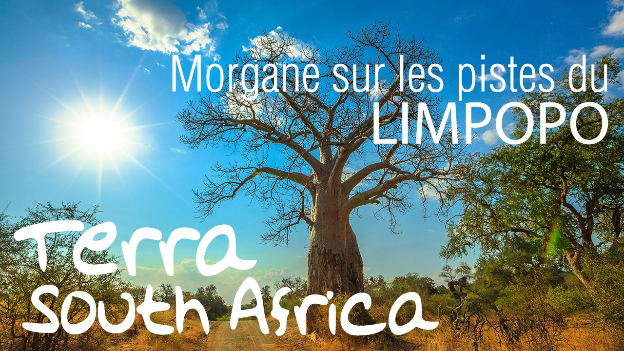 video limpopo - afrique du sud - terra south africa