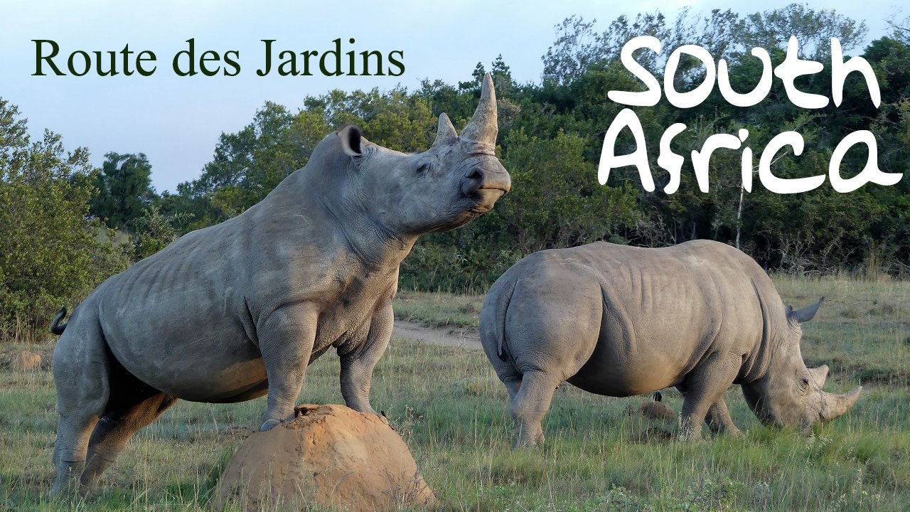 video route des jardins- afrique du sud - terra south africa