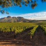 Vignobles afrique du sud - terra south africa