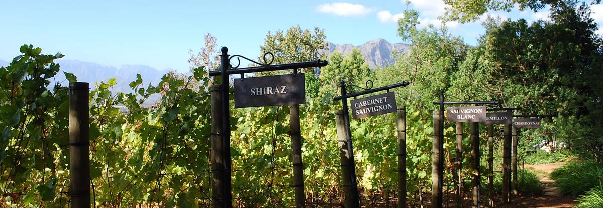 vins afrique du sud - terra south africa