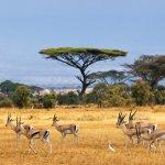 gazelles afrique du sud - terra south africa